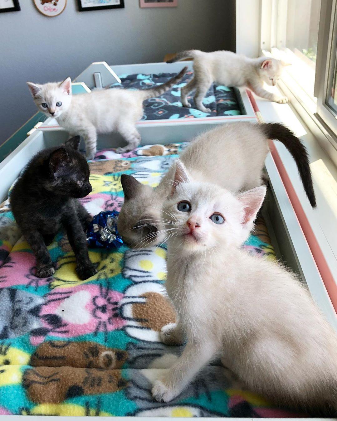 The Simple Guide Of Feeding Kittens Feeding Kittens Kittens