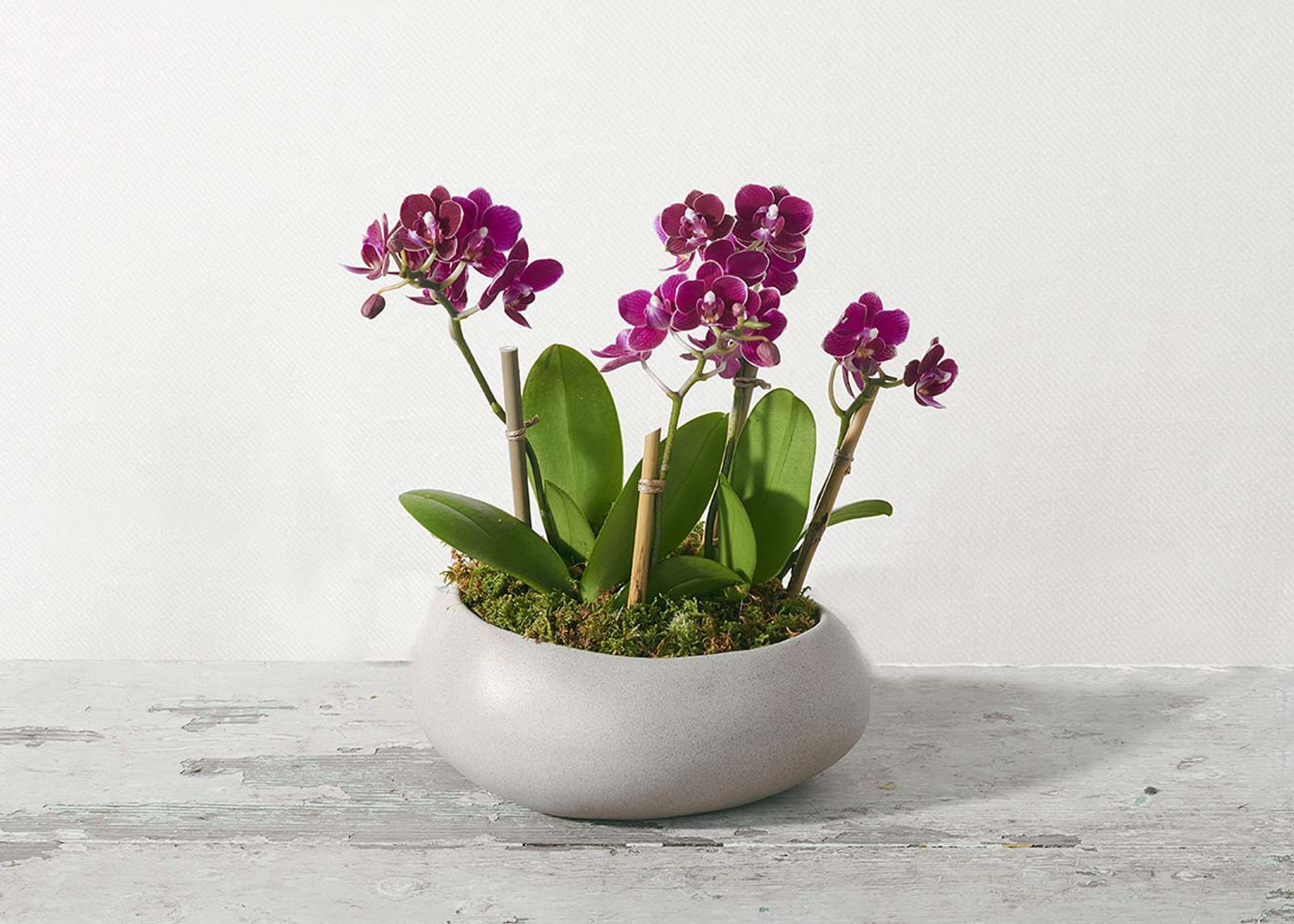 The Aphrodite Orchids Flower Delivery Orchids Amazing Flowers