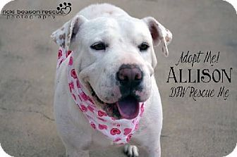 Pin By Michelle Marino On Real Women Love Pit Bulls Pets
