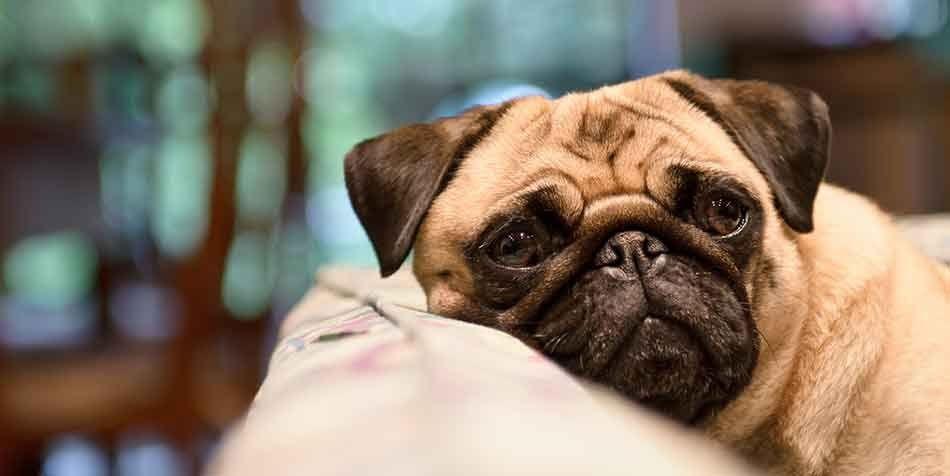 Dogs breath smells fishy