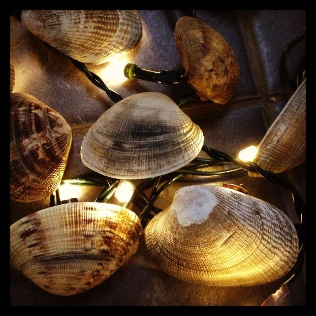Fairy twinkle lights with Clam sea shells. Perfect ...