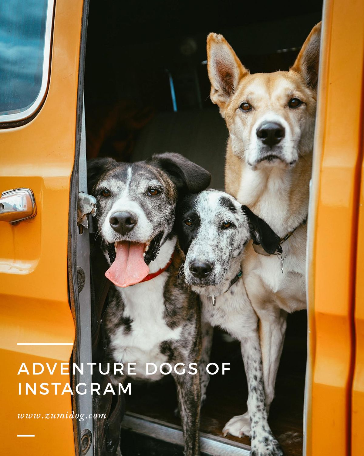 We're all spending a little more time at home these days. So if you're looking for some inspiration until you can get out there again, these adventurous dogs on Instagram have got you covered.  Spend a few minutes scrolling through these accounts to get inspired for your next adventure with your own pup!  #ZUMI #InBetweenTheGo #NeverRoamAlone #Doglead #Dogleash #adventuredog #dogsonadventures #hikingdogsofig #travelwithdogs #explorethewild #takemoreadventures #dogsofinstagram #dogsofinsta
