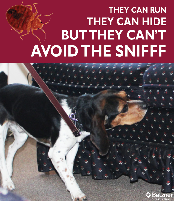 Benefits of Using Scent Detection Dogs for Bed Bug