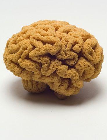 Mind like a Sponge