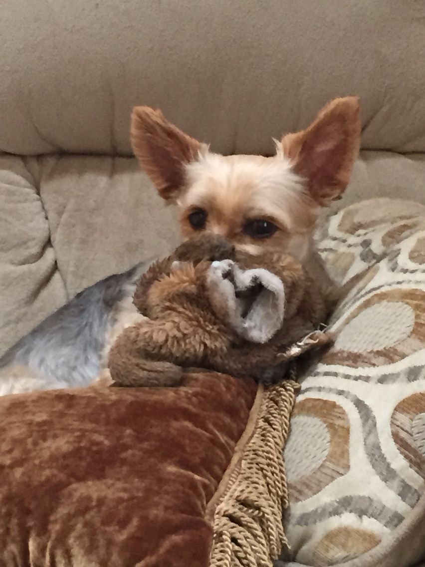 He just loves his bear. My Louie Baby dogs, Bear, Dogs