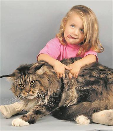 В Украине выбрали самого большого кота ウクライナで一番大きな猫が選ばれた