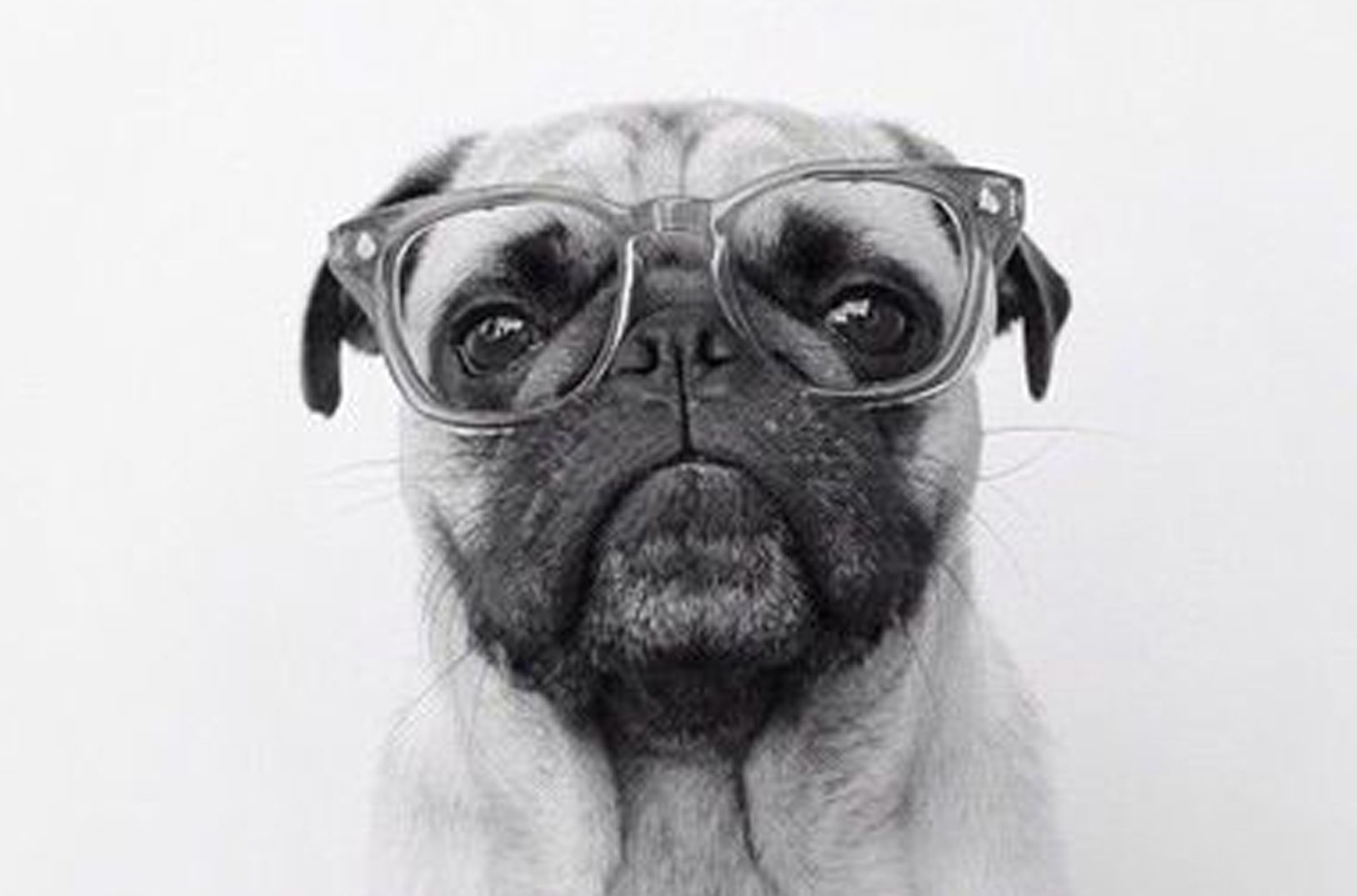 Pug Iphone Wallpaper: Morfologia E Caratteristiche Tipiche Del Carlino