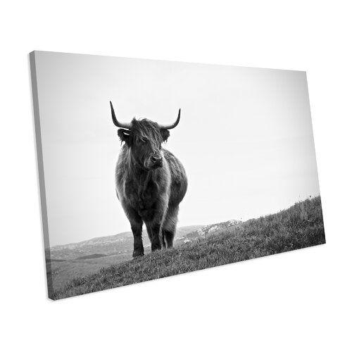Photo of Alpen Home Leinwandbild Scottish Highland Cow | Wayfair.de