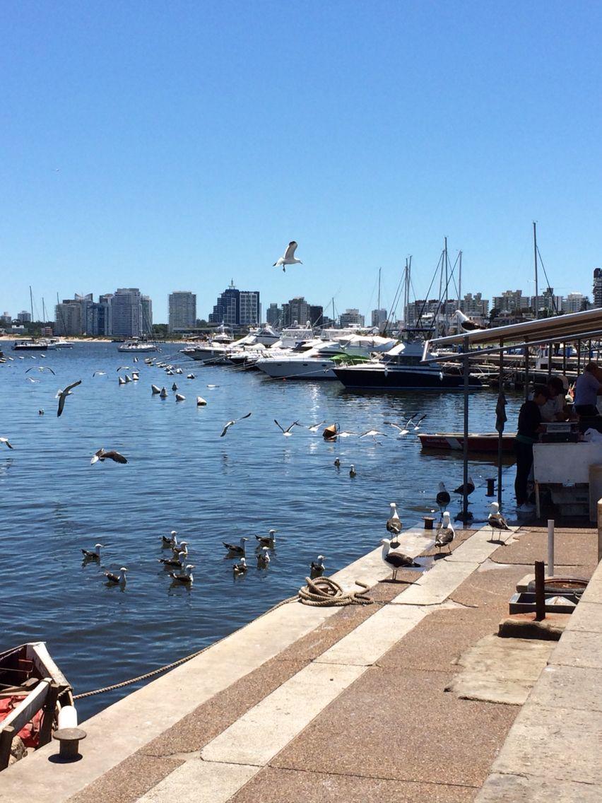 Puerto De Punta Del Este Favorite Places South America Beach