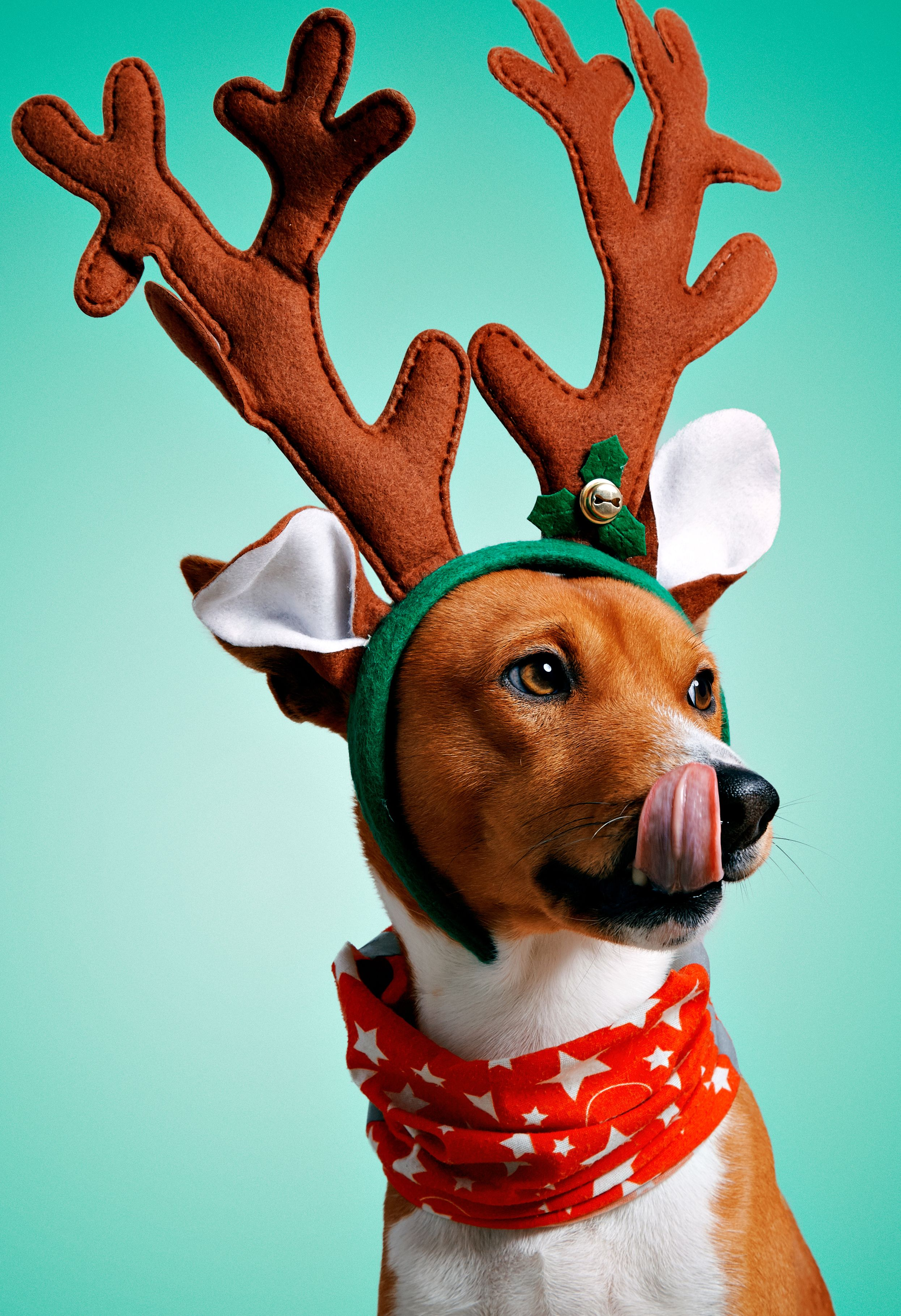 Pin On Dog Christmas Pictures
