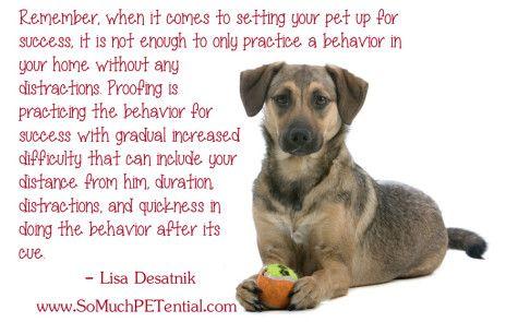 Dog Training Tip Proofing Behavior By Cincinnati Dog Trainer