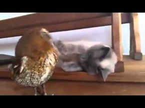 Be Chouette schattig! uiltje en poes kunnen niet zonder elkaar - hln.be   cats