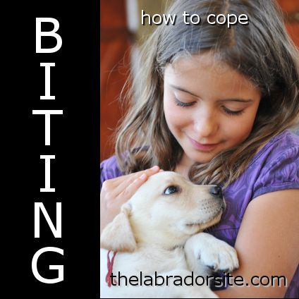 When Do Puppies Stop Biting And How To Cope With A