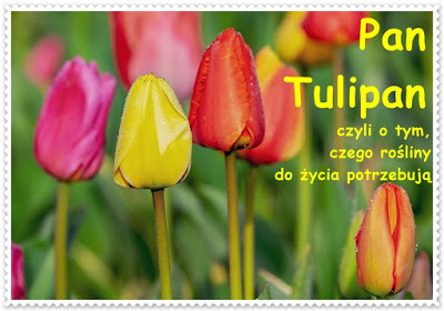 Boberkowy World Pan Tulipan Czyli O Tym Czego Rosliny Do Zycia Potrzebuja Propozycje Aktywnosci W Ramach Edukacji Domowej