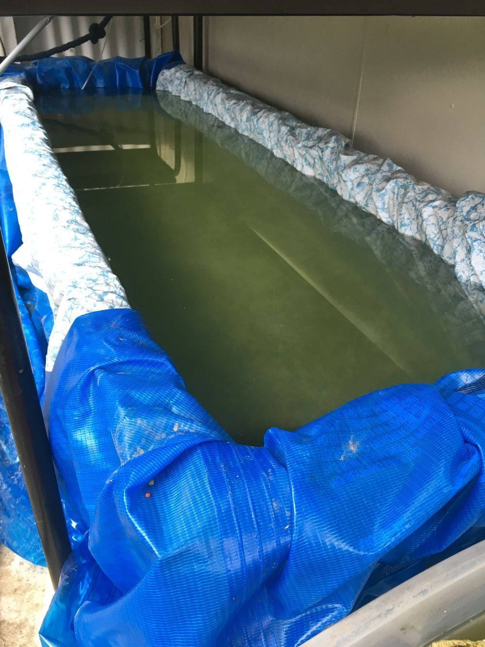 Filled with water and goldfish aquaponics hydroponics