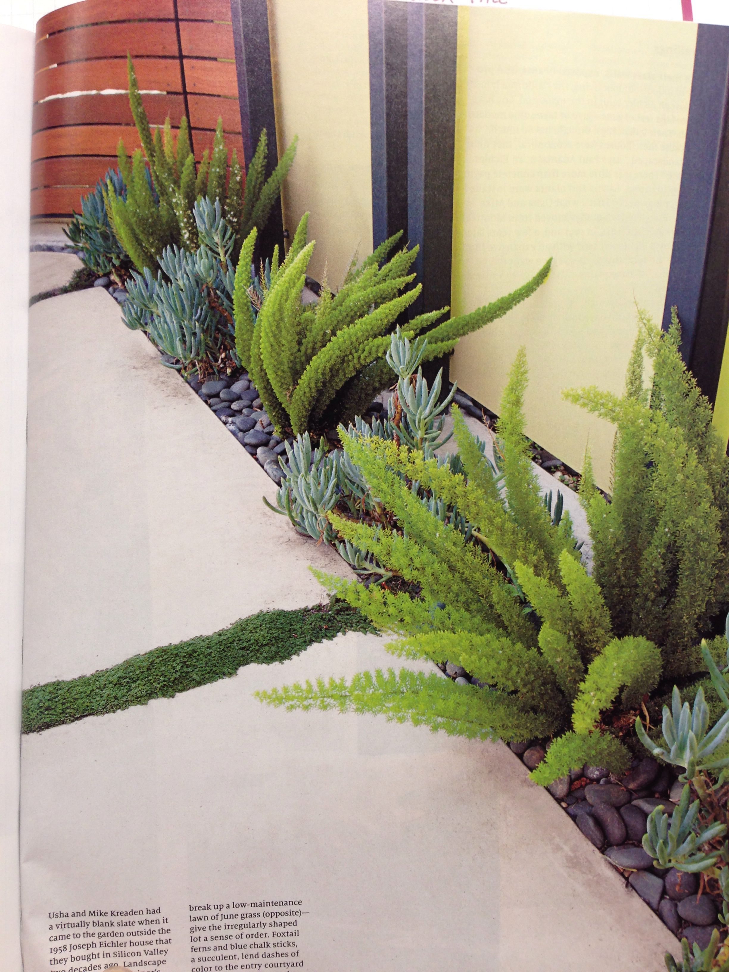 Sidewalk Edge Modern Garden Landscaping Backyard Landscaping Designs Modern Landscape Design
