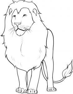 how to draw a lion step 13