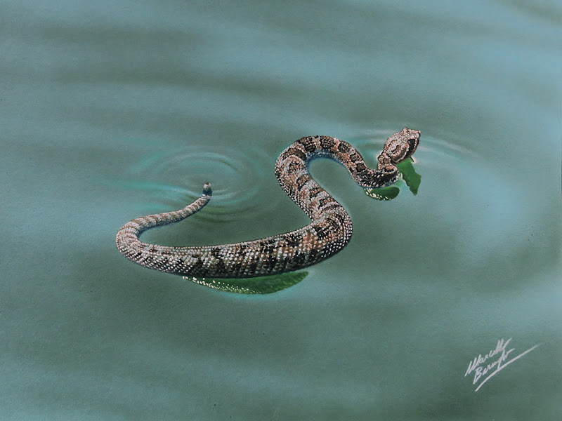 Rattlesnake Drawing In 2020 With Images Snake Drawing