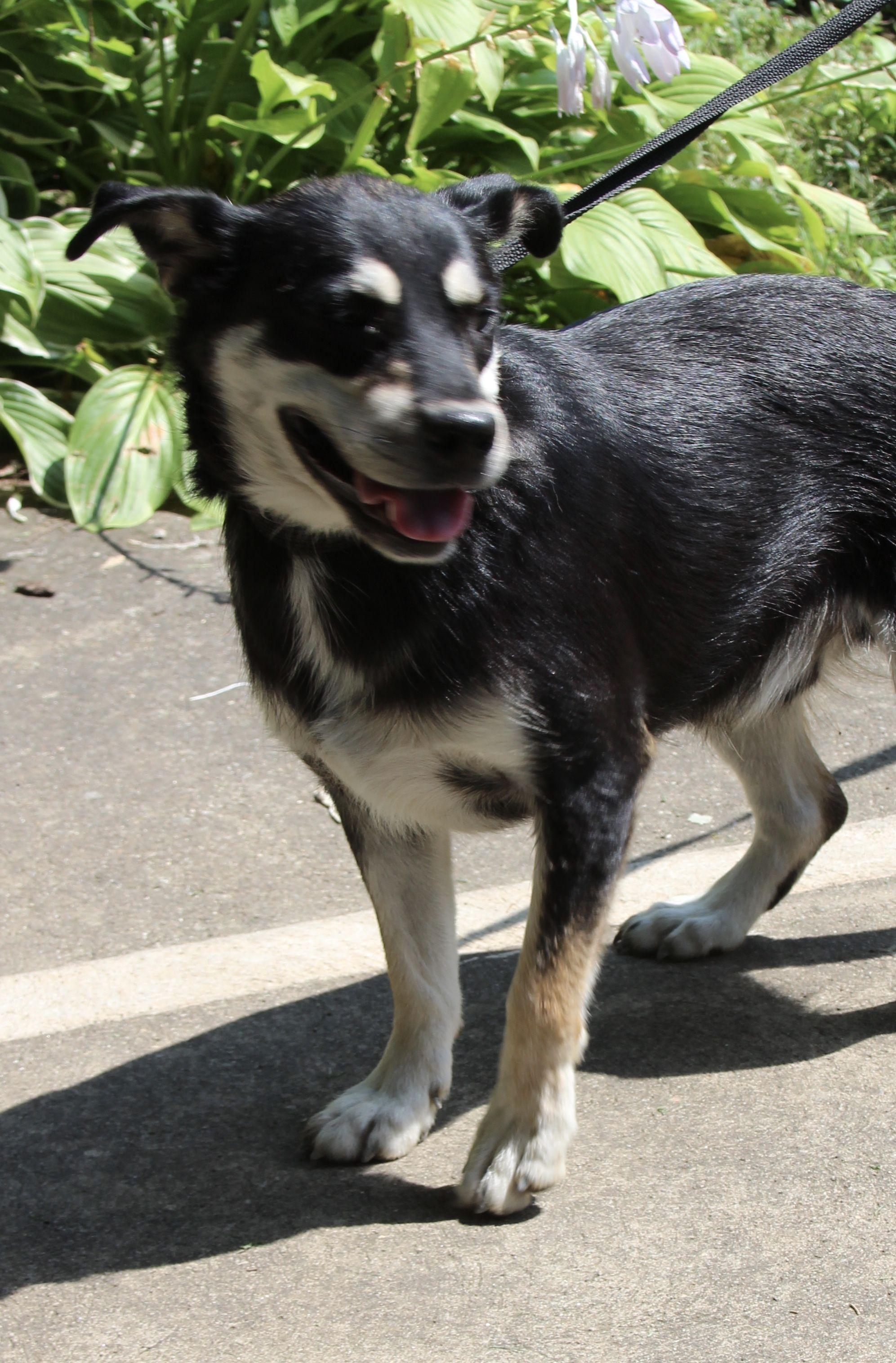 Adopt jordan on petfinder pets dogs humane society