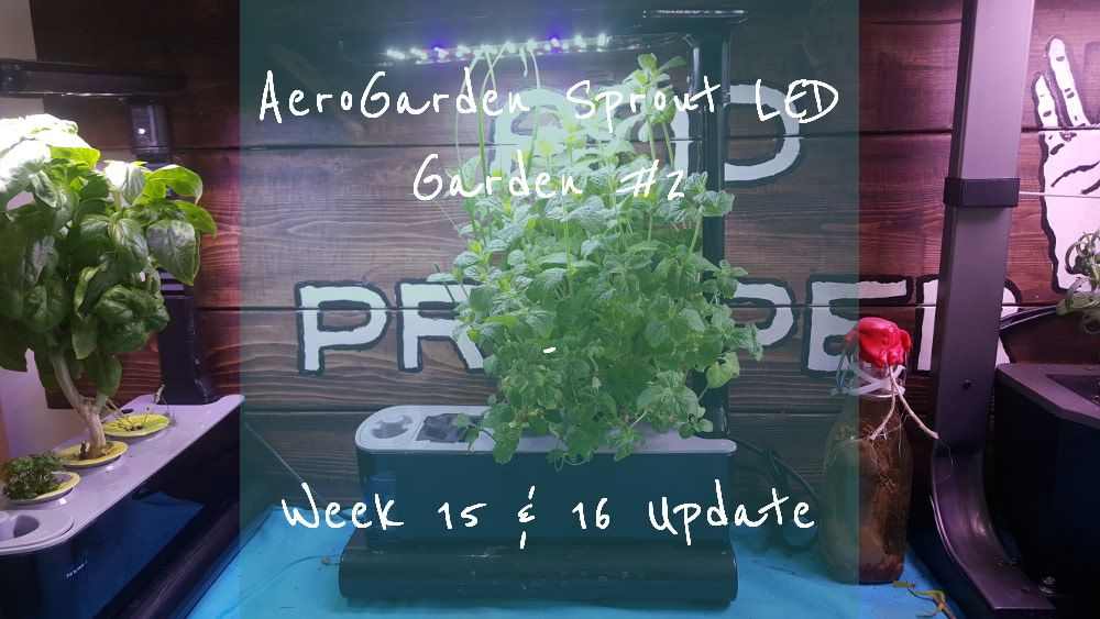 Aerogarden Sprout Led Garden 2 Week 15 16 Update Led 400 x 300