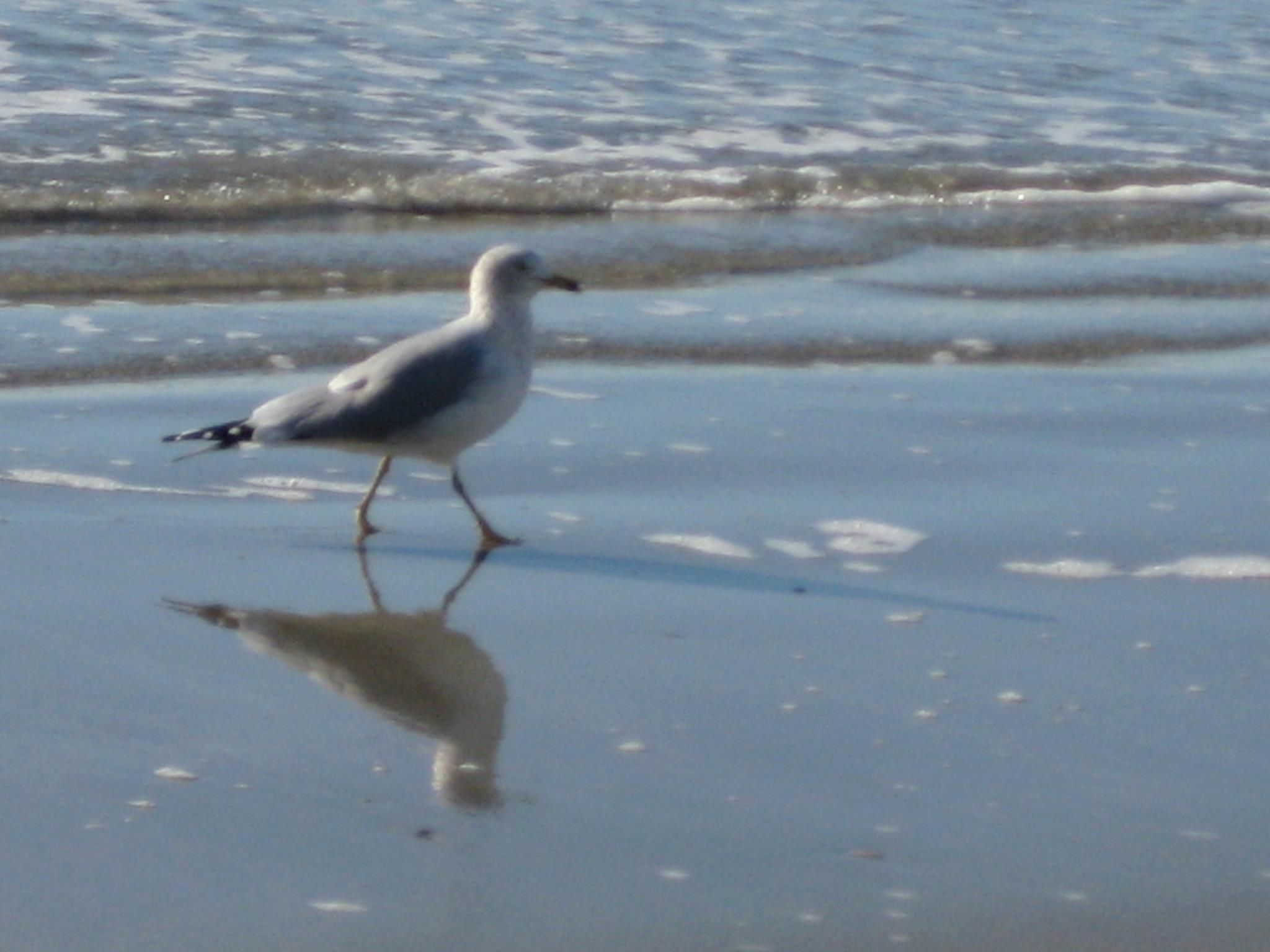A Unique View Of Seagull In Myrtle Beach South Carolina
