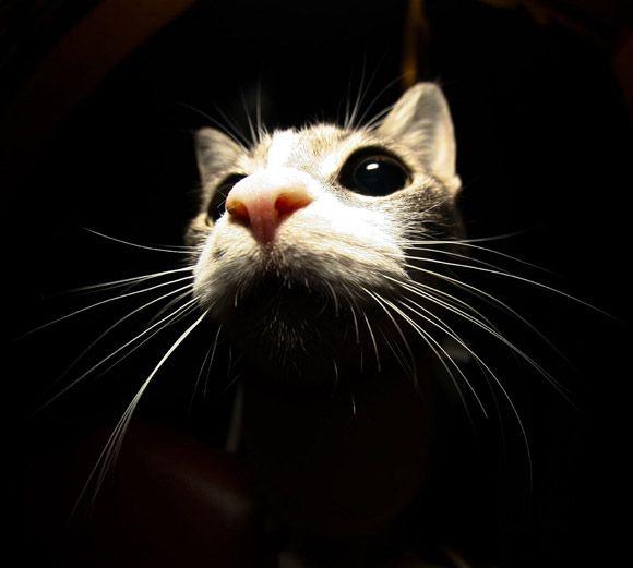 """Trixie: a cat, impersonating a mouse.""""  Bridget C"""
