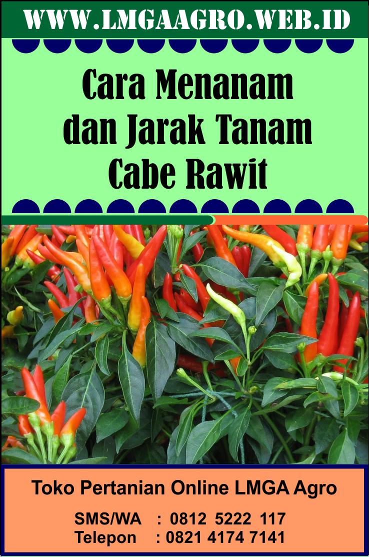 Cara Menanam Cabe Merah : menanam, merah, Menanam, Jarak, Tanam, Rawit, Menanam,, Tanaman,, Hortikultura