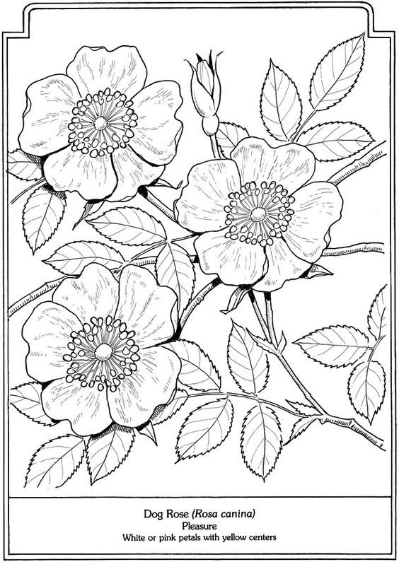 Welcome to Dover Publications - The Language of Flowers Coloring ...