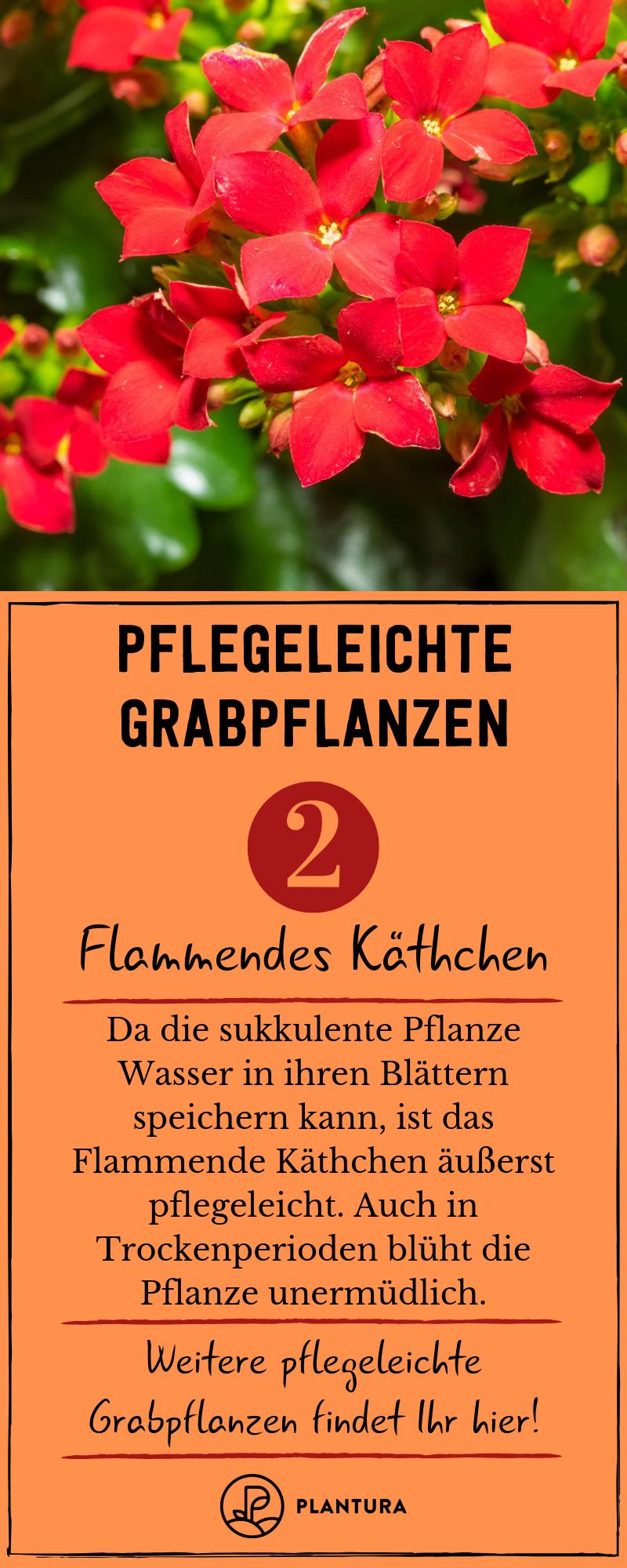 Grabpflanzen: Beispiele für pflegeleichte Pflanzen