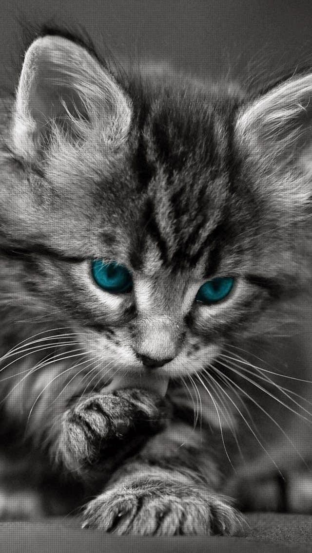 Adorable Kitty Cat Cats Cute Cat Gif Kittens