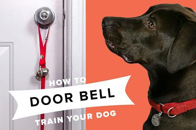 Inquisitive How To Train Your Dog Get On Your Smart Phone Tips