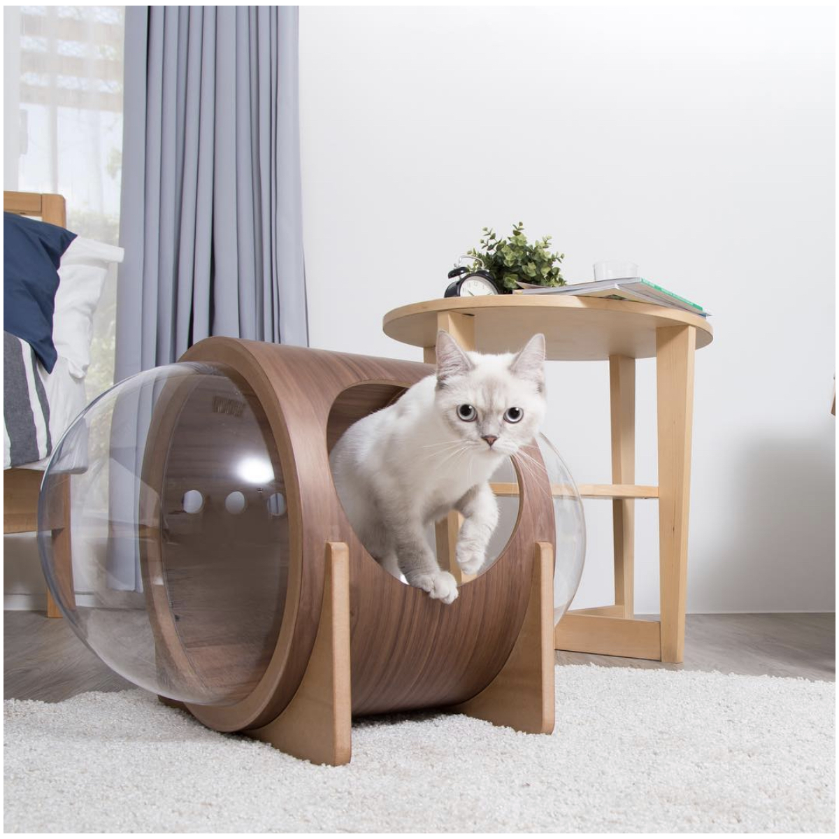 b2aa04ee2e13 Spaceship Alpha Ultra Modern Cat Bed. Are you looking for a Cat Bed for  your feline friend? We are here to help you! We have accumulated many of  the finest ...