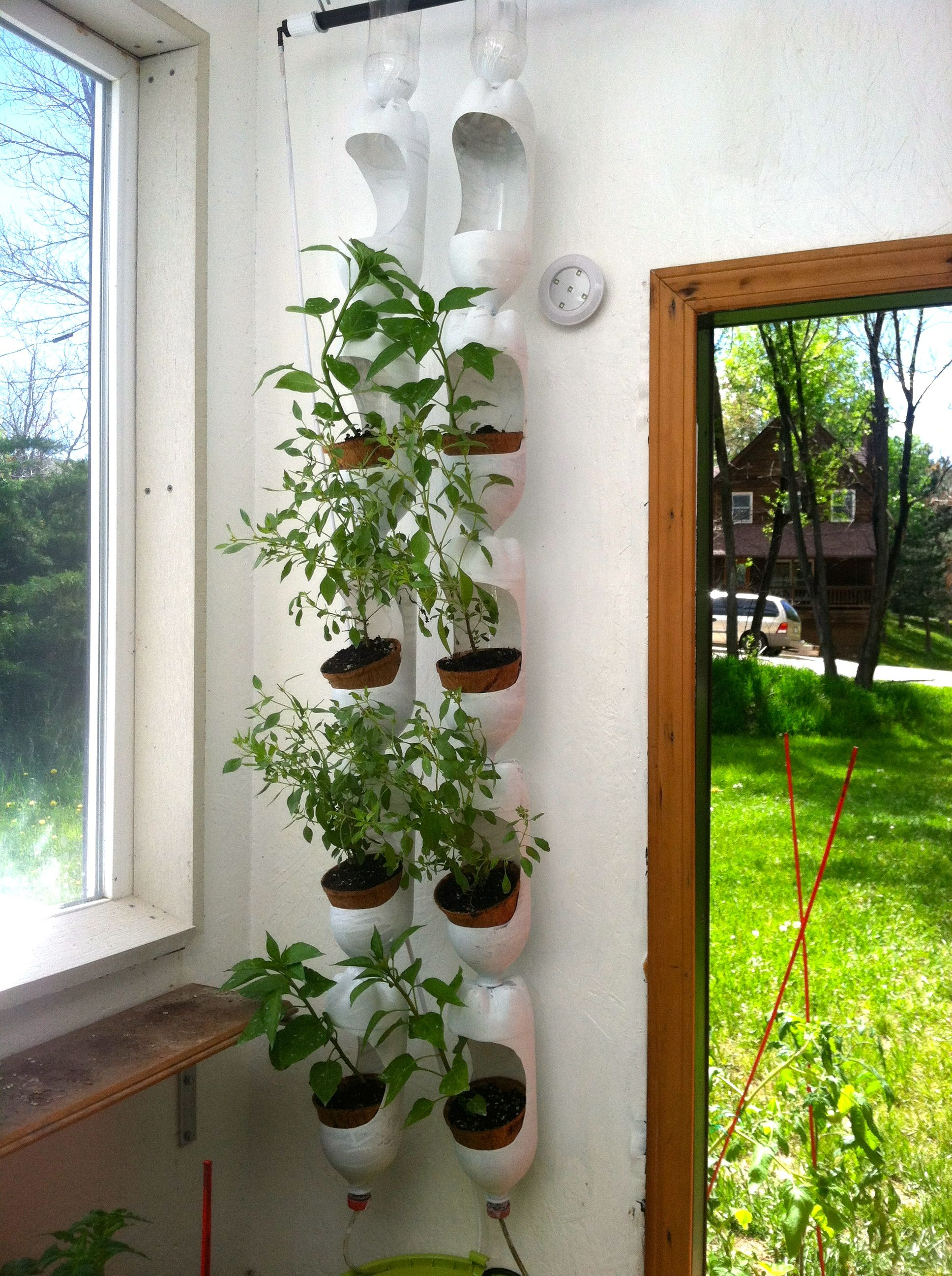 Plenty of basil growing in vertical garden made out of recycled ...