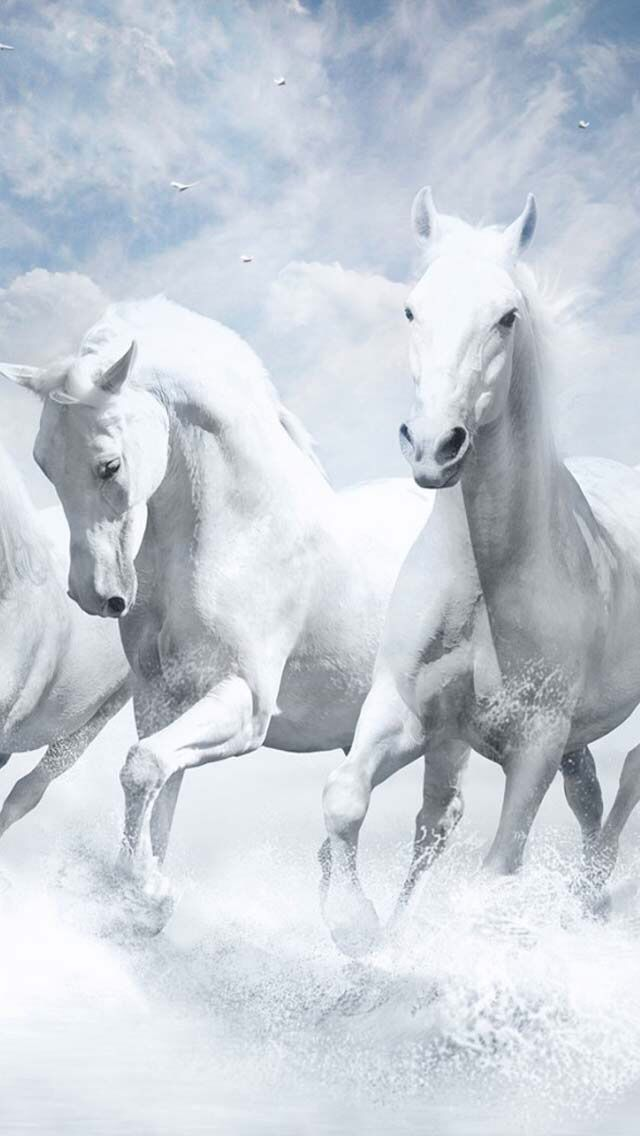 Horses Running In The Water Horse Wallpaper Horses White Horses