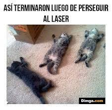 gatos, memes gatos, chistes gatos, risa, gatos risa, meme gatos