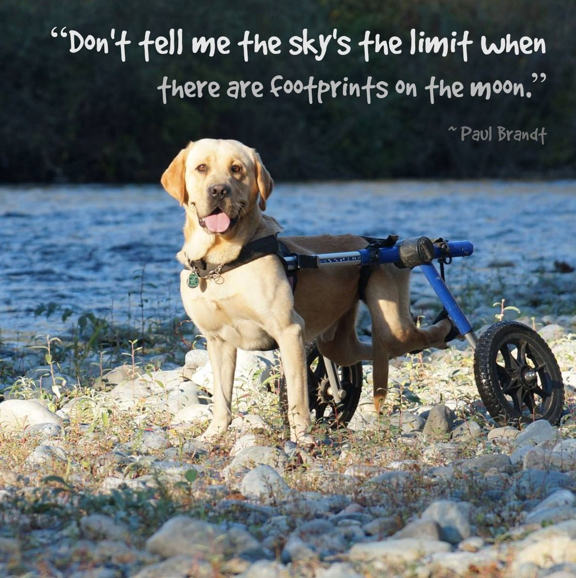 "Inspirational Pet Quotes: Inspirational Quote Of The Week: ""Don't Tell Me The Sky's"