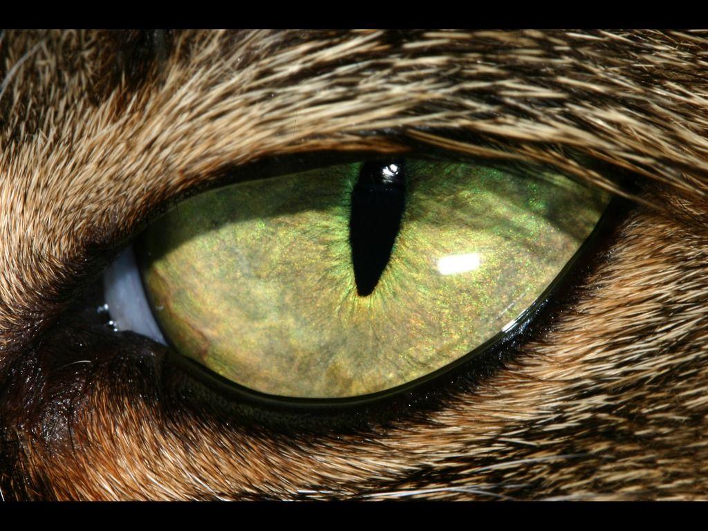 Resultado de imagen para eye cat