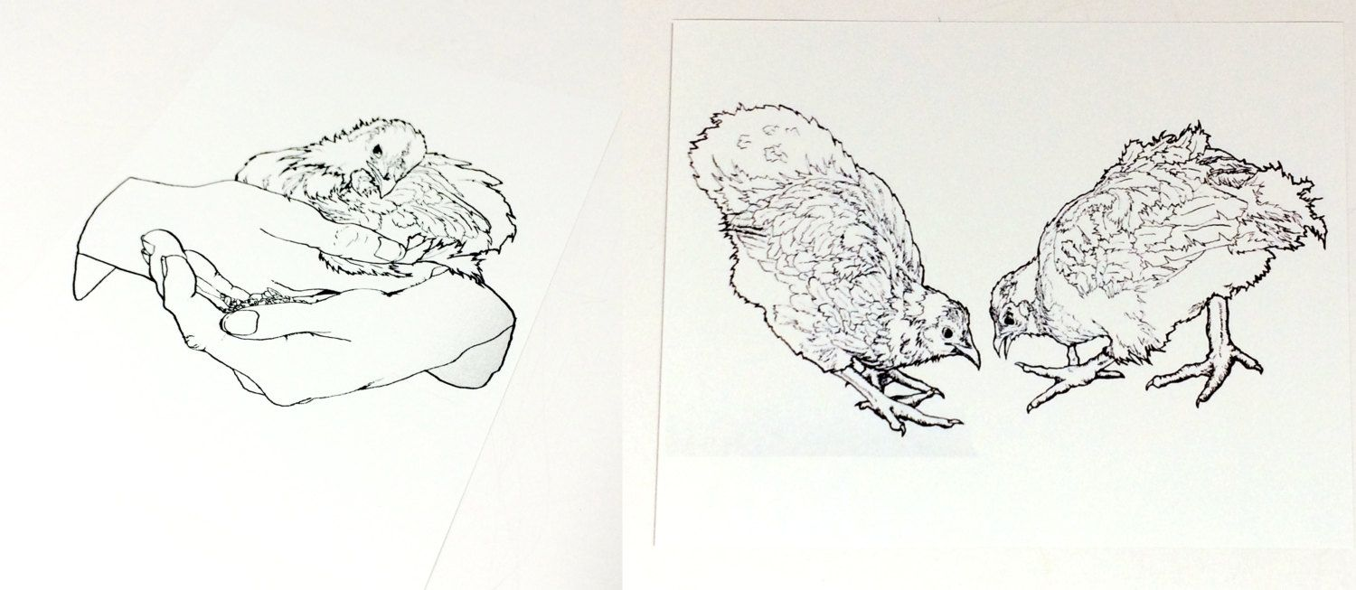 chicken drawing wall art set baby chickens baby chicks drawing
