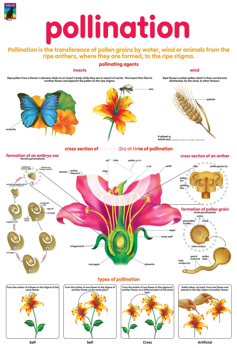 Poster Pollination Educatpublishers Plant Science Horticulture Education Pollination