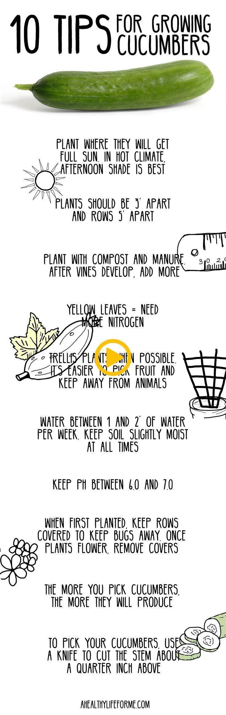 10 Tipps für den Anbau von Gurken. DYI Gardening How To Life Hack Anbau von Gemüse #anbauvongemüse 10 Tipps für den Anbau von Gurken. DYI Gardening How To Life Hack Anbau von Gemüse #anbauvongemüse