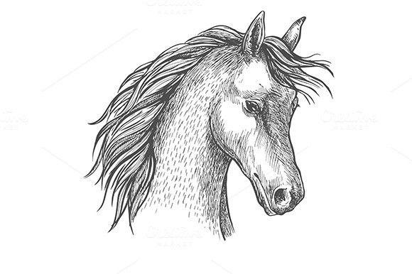 Sketched head of arabian horse. $6.00