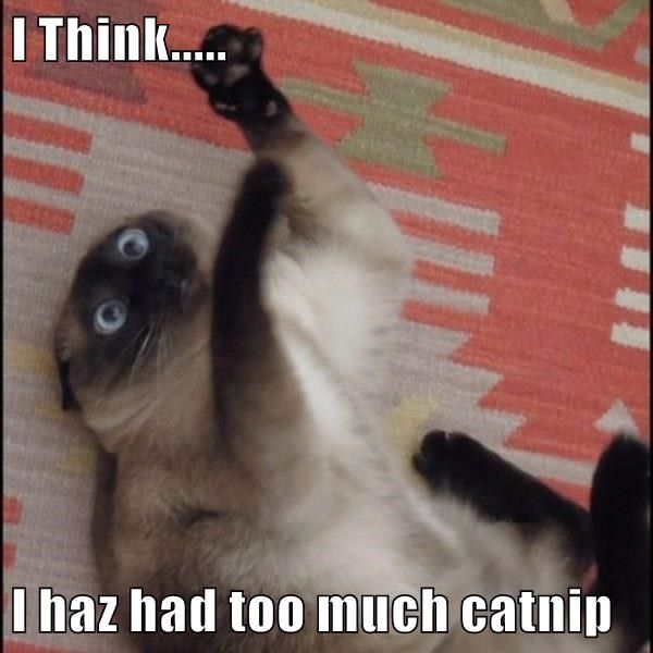 17 Cats That Might Have Had Too Much Catnip Derpy Cats Bad Cats Funny Animal Pictures