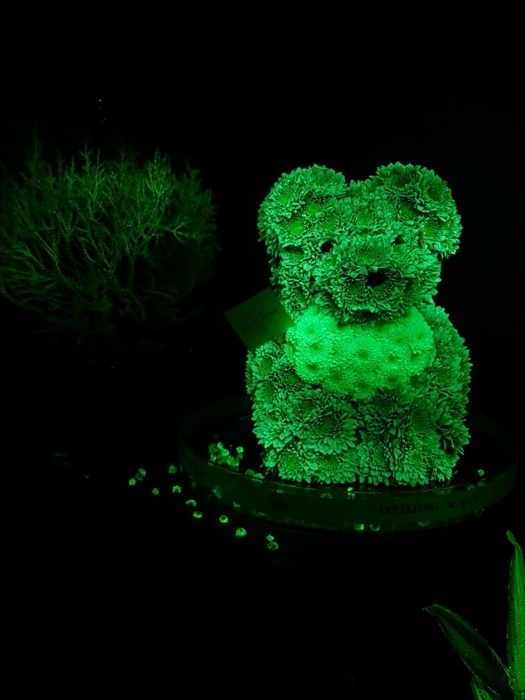 flAVATAR Magical Flowers glow in the dark