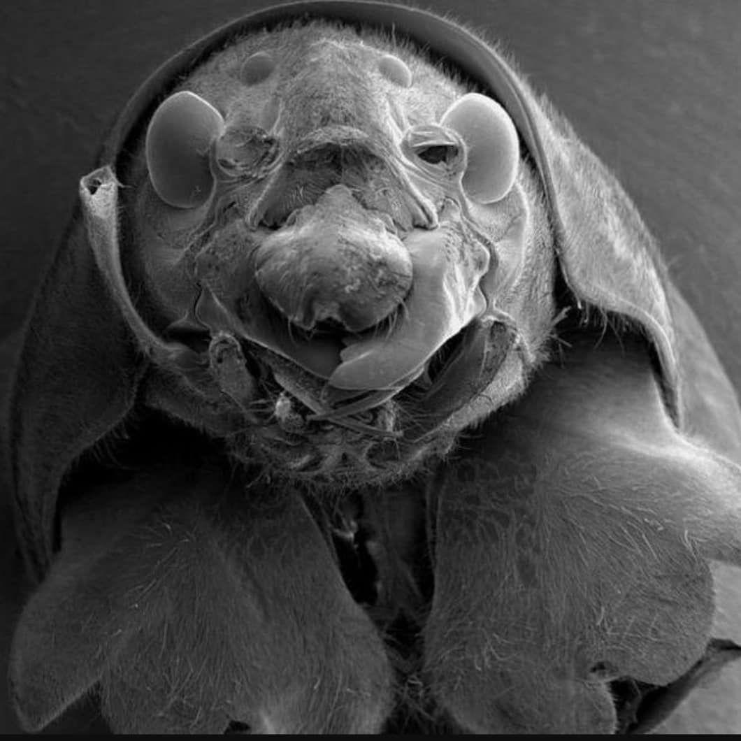 24+ Asbestos under microscope