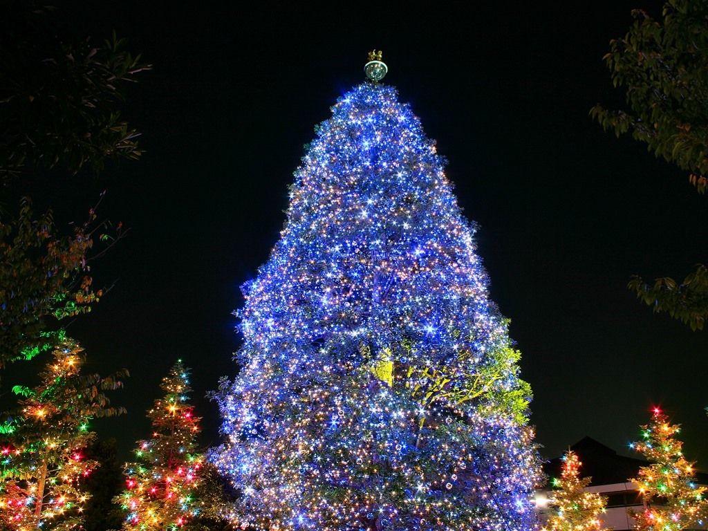 christmas tree outside - Google Search