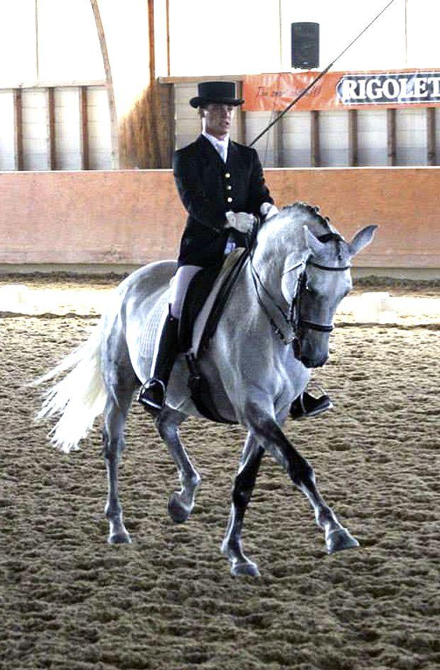 Lusitano stallion Vidago