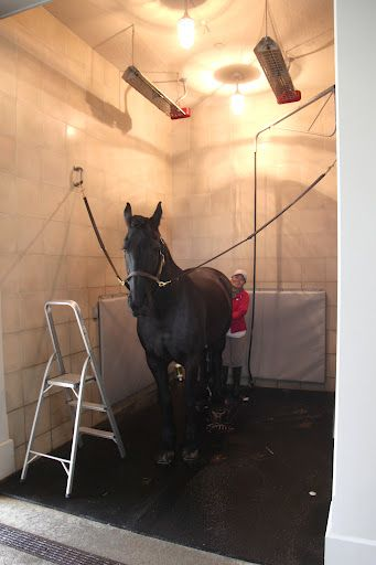 Horse shower in the stable with heat lamps over it Dream Barns