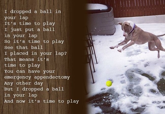 7 Hilarious Poems A Dog Would Pen For Their Human If Dogs Could