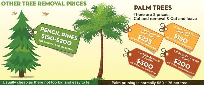 Tree Removal Cost Guide Tree Removal Cost Palm Tree