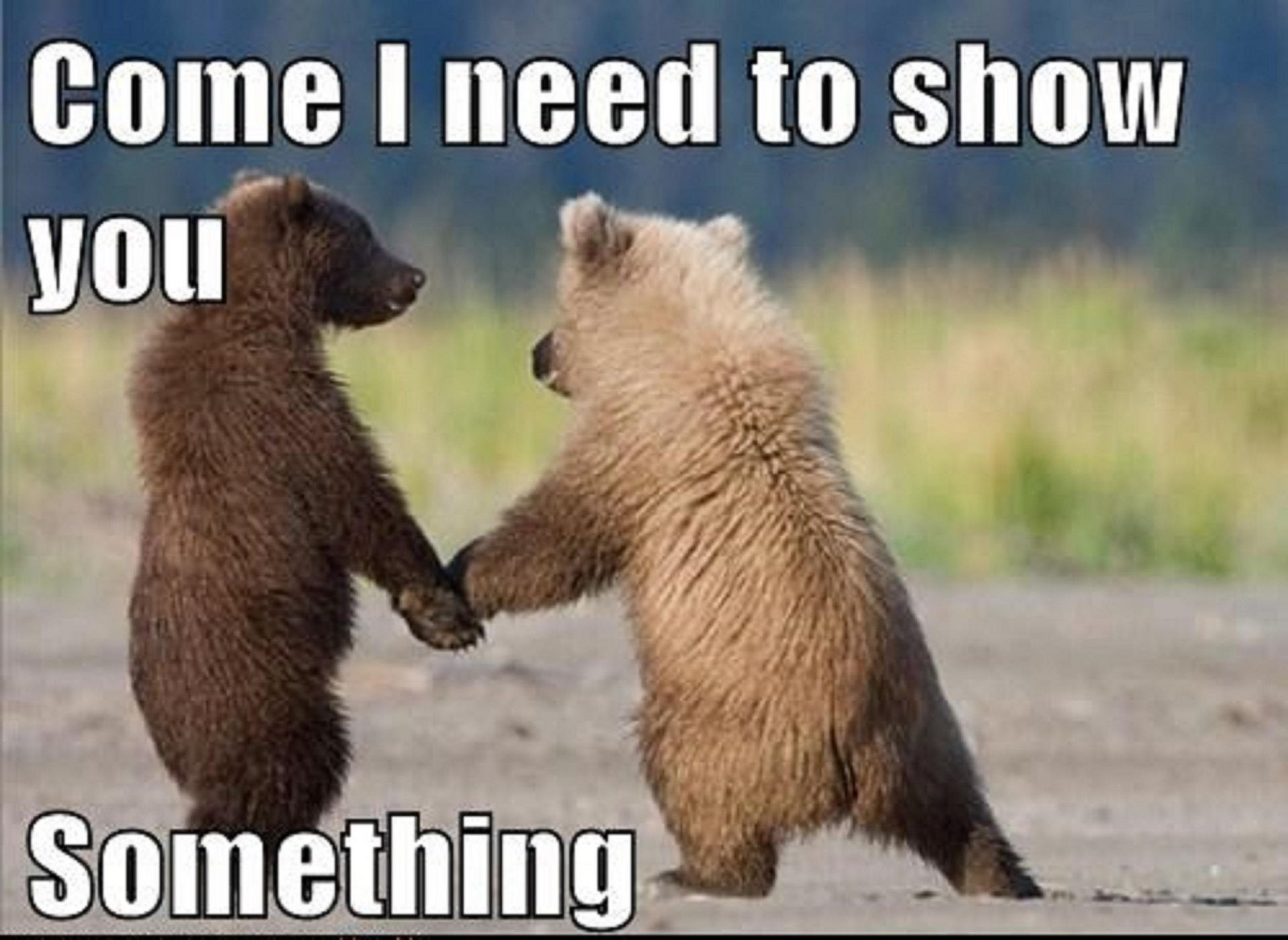 Animals pictures of with funny captions